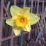 Daffodil Principle