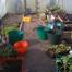 Inveraray Gardening