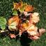 Leaf Thinking