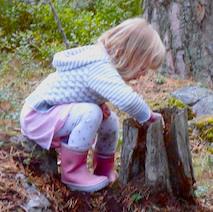 Old Tree Stumps