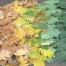 Thumbnail image for Leaf Art