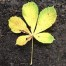 Thumbnail image for Leaf Multiplication