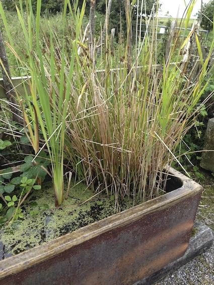 Wetland planter