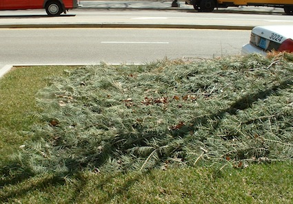 Xmas tree mulch