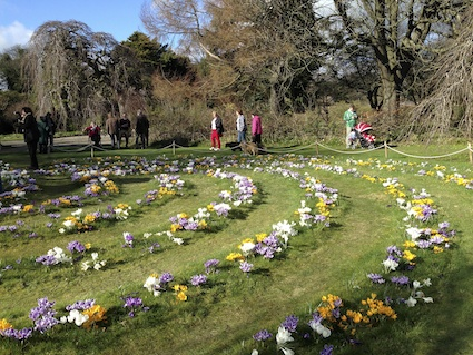 Crocus Labyrinth in Full Bloom