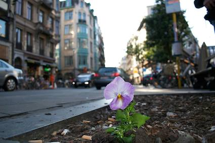 Post image for The Pansy Project