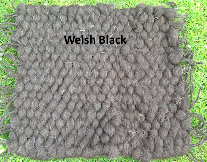 Welsh Black
