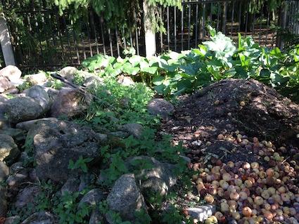 SG Compost heap