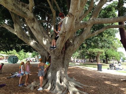 ML Climbing tree