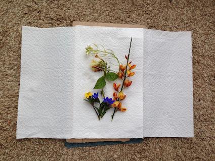 Flower press 2