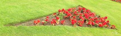 Shape garden 8
